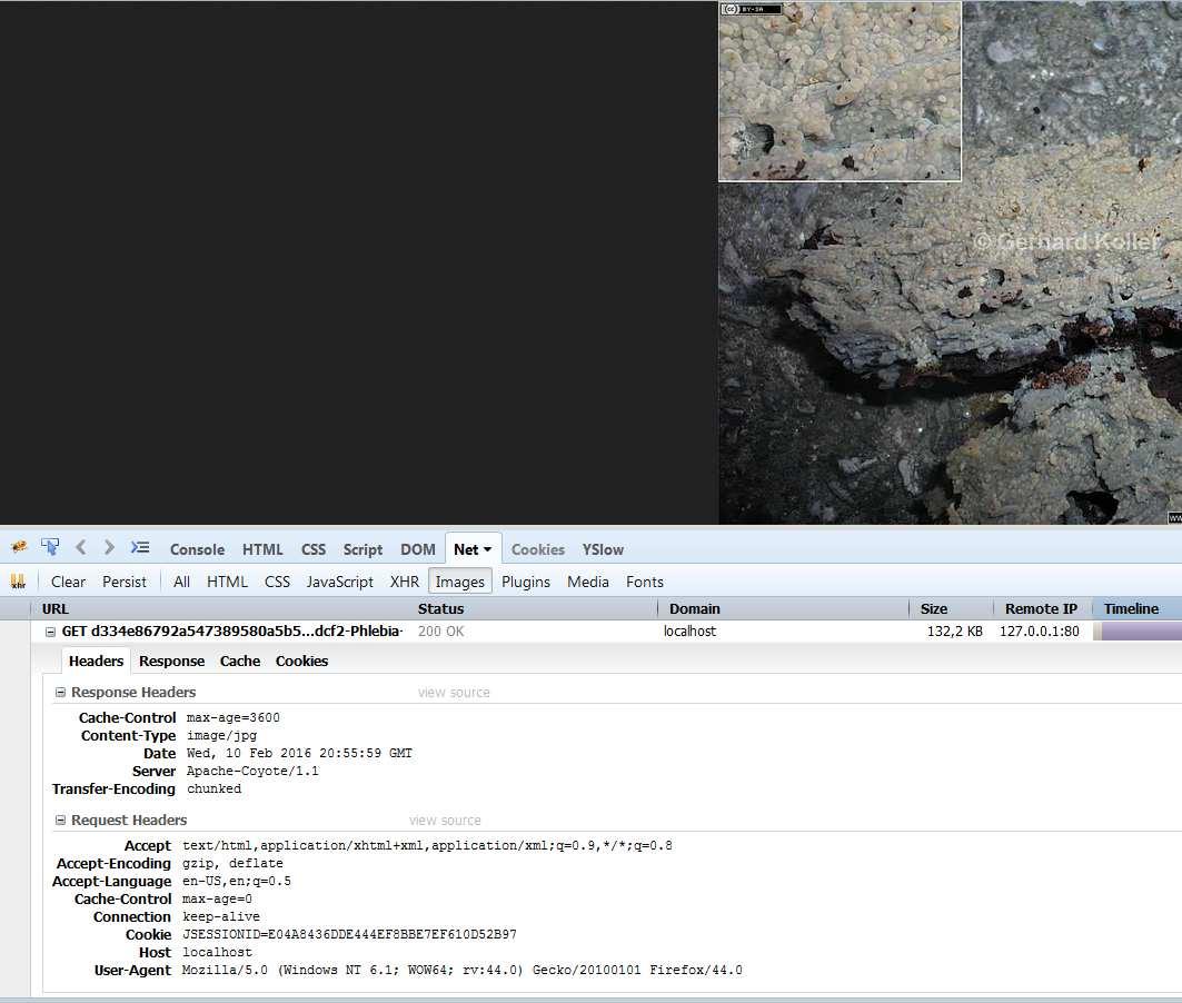Filter/jpg client image refresh  (Servlets forum at Coderanch)