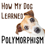 polymorphism